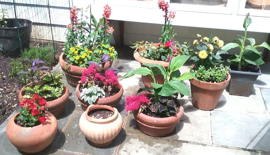 we buy you plant, landscaping, newtown landscaping, newtown square landscaper,